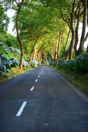 the silence of the world: road in the forest