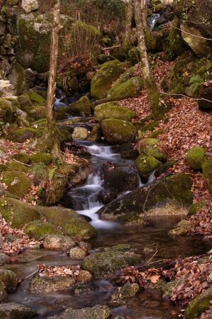small river on the forest Stock Photo - 489159