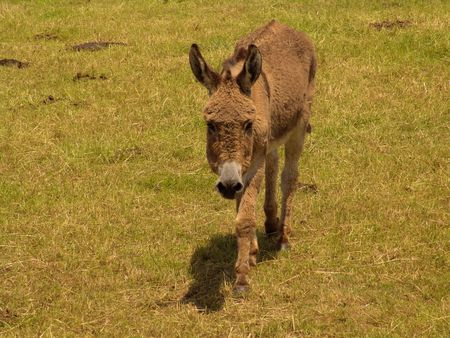 farm donkey photo