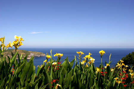 agriculture azores: flowers at the coast