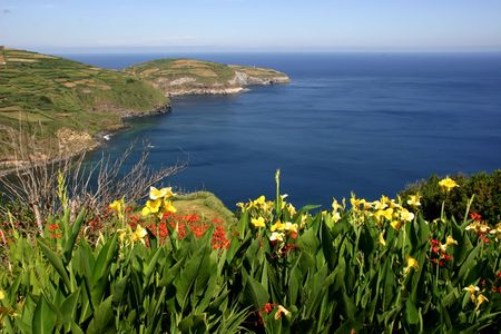 azores flowers at the coast Stock Photo