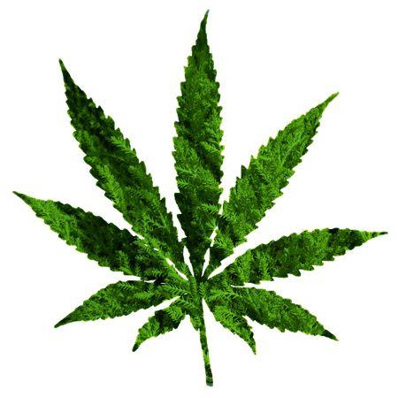 marijuana: cannabis leaf illustration, computer generated