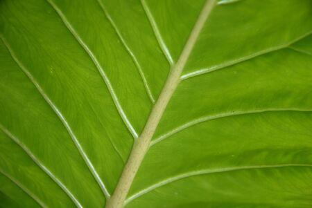 leaf detail photo