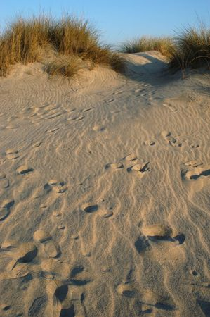 footprints on the dune photo