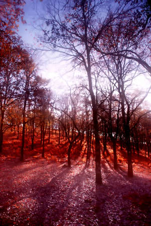 mistic: sun light at the forest with blur in the trees Stock Photo