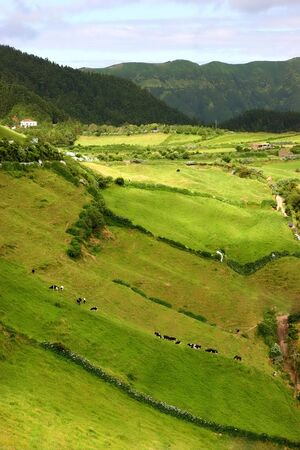 agriculture azores: farm view in the azores island of sao miguel Stock Photo