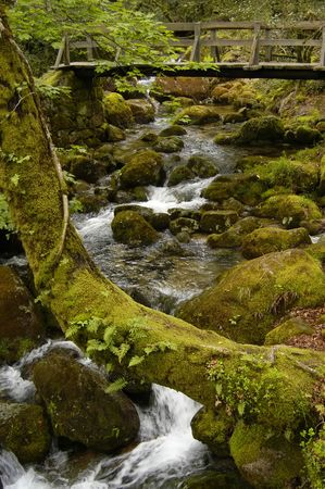 small river in the north of portugal park photo