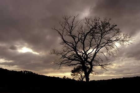 tree at the sunset photo
