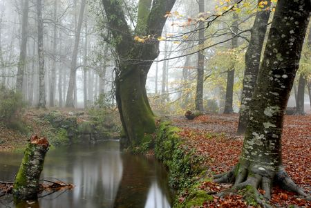 murk: small river in the portuguese national park