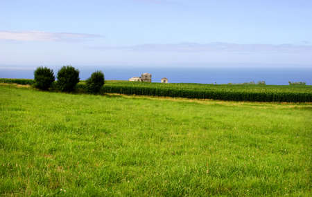 agriculture azores: azores green fields at sao miguel island Stock Photo
