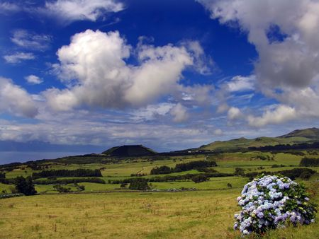 azores landscape and flowers photo