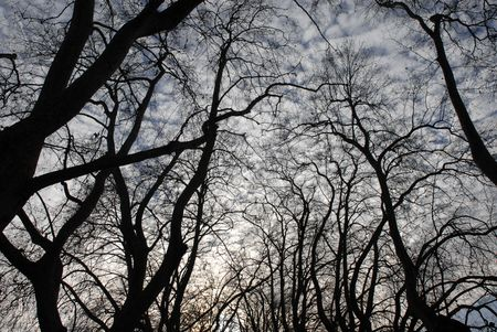 Silhouette Trees with the clouds in the sky photo