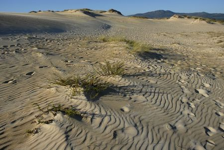 detail of the north of spain desert Stock Photo - 1796327