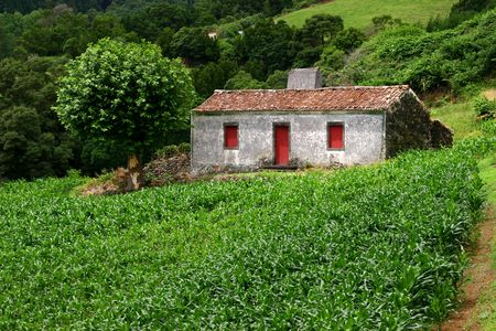 unnatural: farm house with a field of corn in azores