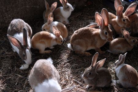 lots of big and small rabbits in the cage Stock Photo