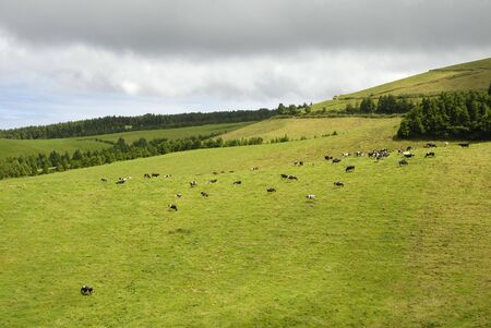 azores typical view at the island of Sao Miguel 스톡 콘텐츠