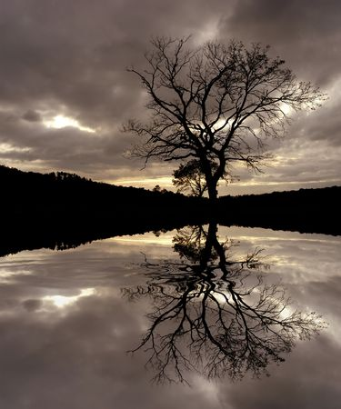 tree at the sunset with water reflection photo