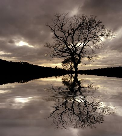 tree at the sunset, with water reflection photo