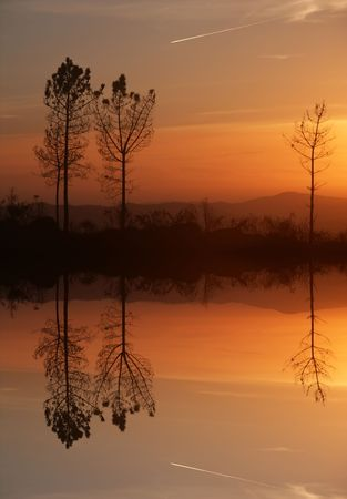 trees at the sunset, with water reflection Stock Photo - 3333562
