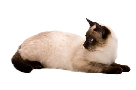 grey haired: White cat looking left. On a white background