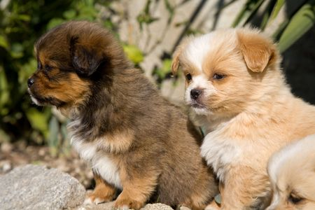 young happy puppies playing at the garden Stock Photo - 4813334