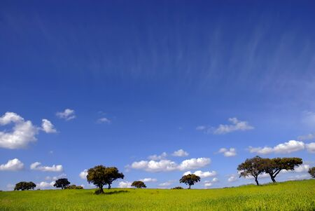 typical portuguese landscape of Alentejo in the south of the country photo