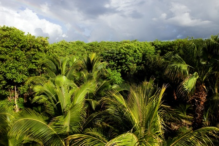 beautiful lush tropical jungle at Yucatan, Mexico  Standard-Bild