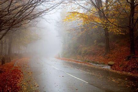 rain in the forest  Standard-Bild