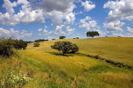 portugal agriculture: alentejo farm view, in the south of portugal