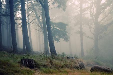 Madeira rainforest of laurisilva at the mountains, world heritage Standard-Bild
