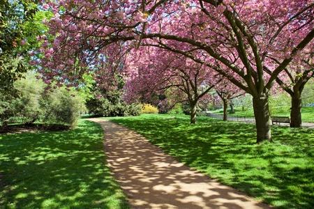 bomen aan de Hyde Park in Londen, Verenigd Koninkrijk Stockfoto