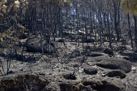 ravaged: Burned forest after a huge fire in the north of Portugal