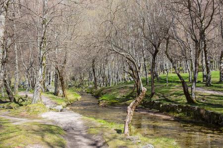 Covao d'ametade im Naturpark Serra da Estrela. Portugal Standard-Bild - 93245804