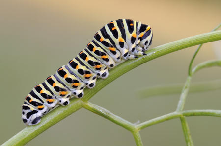 Caterpillar in spring