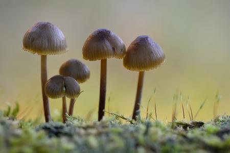 fungi: Fungi