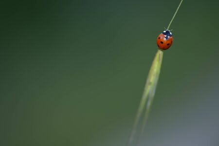 coccinellidae: coccinellidae spring Stock Photo