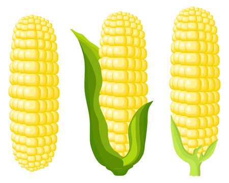Corn cobs on white background. Vector Illustration set Çizim