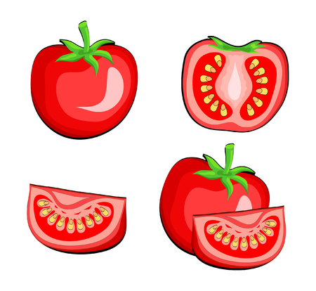 Set of tomato vegetables half and slice. Hand draw vector Illustration, eps 10 Illustration