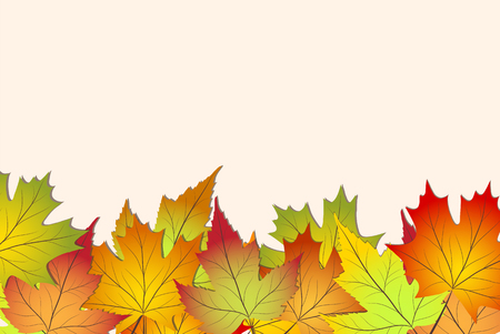 Beautiful colorful autumn leaves, back to school stock vector illustration background Illustration