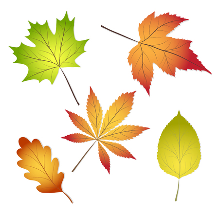 Collection of beautiful colorful autumn leaves isolated on white background, stock vector illustration