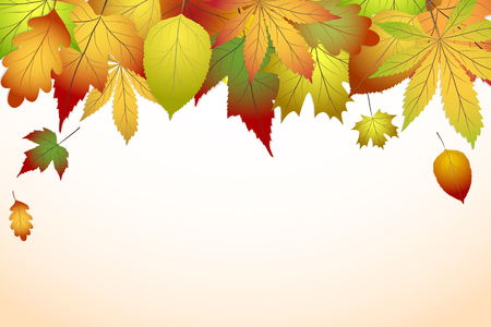 Beautiful colorful autumn leaves vector illustration