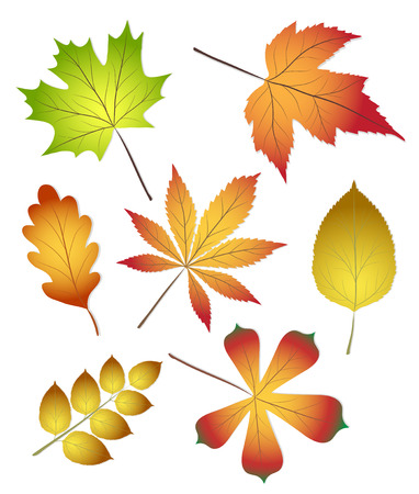 Collection of beautiful colourful autumn leaves isolated on white background, stock vector illustration Illustration