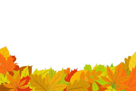 Autumn design backdrop with colorful fallen leaves from the tree.