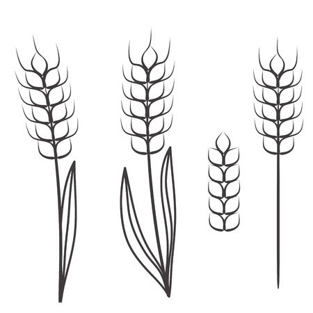 wheat ears scretch isolated on white, stock vector illustration
