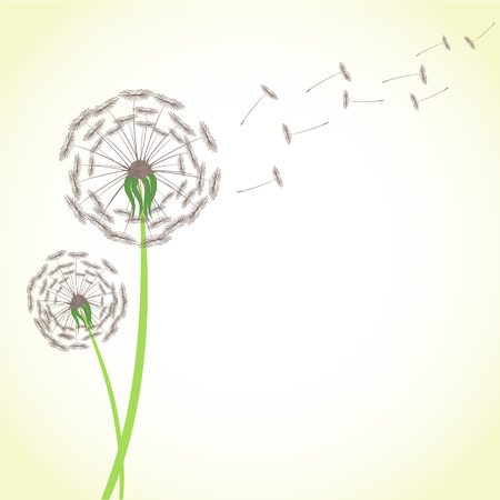 Summer dandelion with wind blowing flying seeds isolated on white background. Blossom flower fluffy plant stock vector illustration