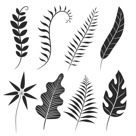 Palm leaf silhouette. Monstera frond, plant leaves silhouettes and tropical palms fronds. Coconut leaf branch, tropical jungle beach tree frond isolated vector icons set
