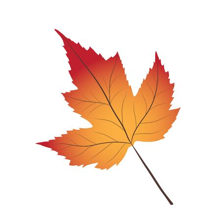 Bright red and yellow autumn leaf on white, stock vector illustration