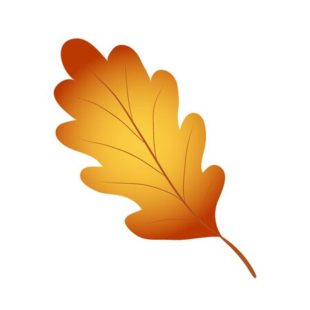 Bright red, yellow and brown autumn oak leaf on white, stock vector illustration