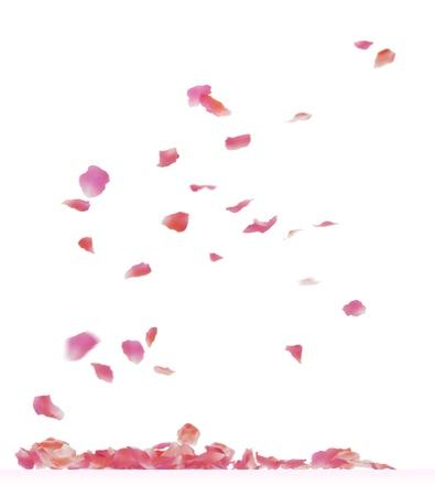 Fallende Rosenblättern. Isoliert auf weißem Hintergrund.