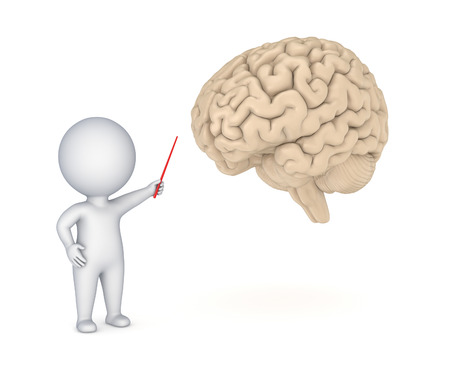cerebra: 3d small person showing to human brain. Stock Photo